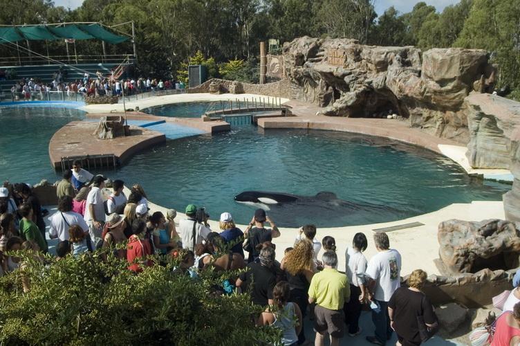 La vérité sur les parcs aquatiques d'animaux marins. Kshamenk-in-tiny-tank-a