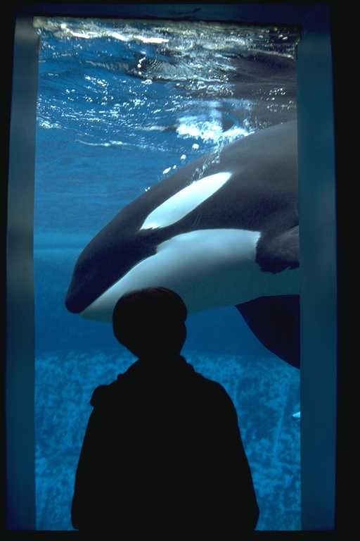 Orcas in captivity sad