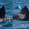 20100709 & 20130101-NZE-INV-D1-424a
