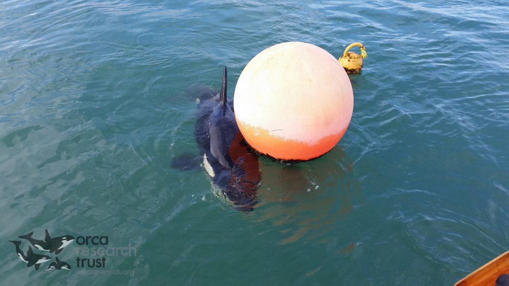 Hugging the buoy for the small amount of comfort available to him until help arrived
