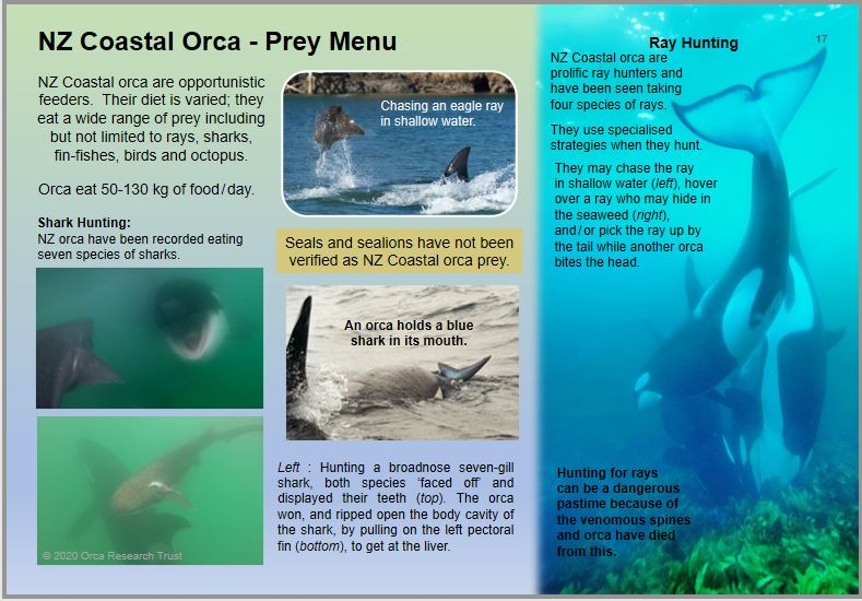 2020 Guide to NZ orca page 17 (thumbnail)