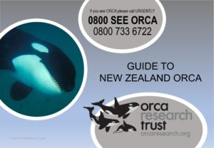 2020 Guide to NZ orca (thumbnail)